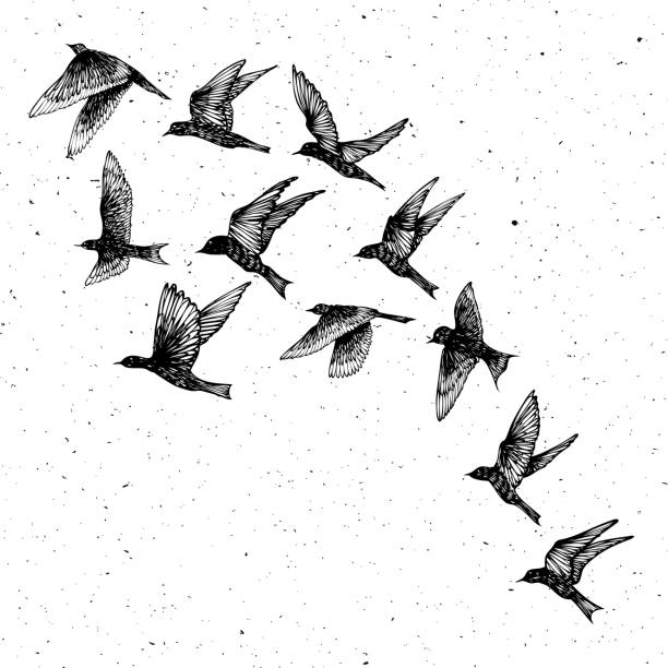 Set of black hand drawn strokes birds, flock. Drawing sketch. On textured Abstract grainy texture dust stain particles like stipple. Inspirational body flash tattoo ink.  Vector. Vector. bird drawings stock illustrations
