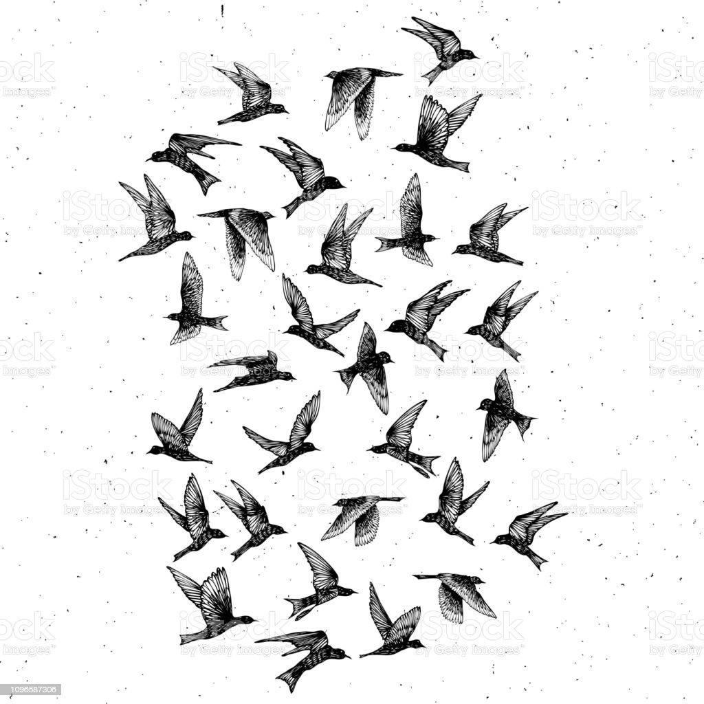 Vetores De Conjunto De Pássaros De Traços Preto Mão