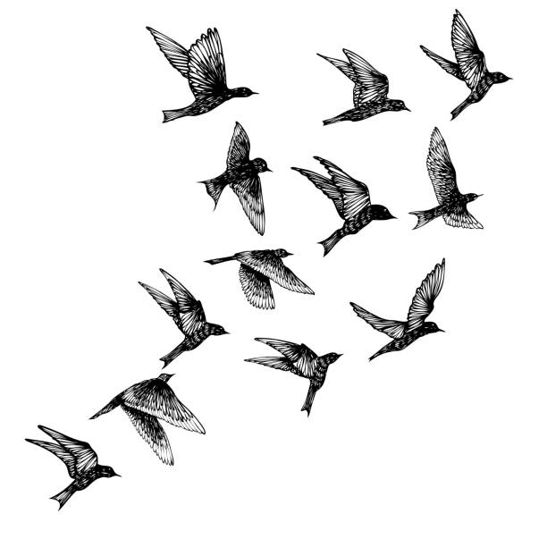 Set of black hand drawn strokes birds, flock. Drawing sketch. On white background. Inspirational body flash tattoo ink.  Vector. Vector. etching stock illustrations