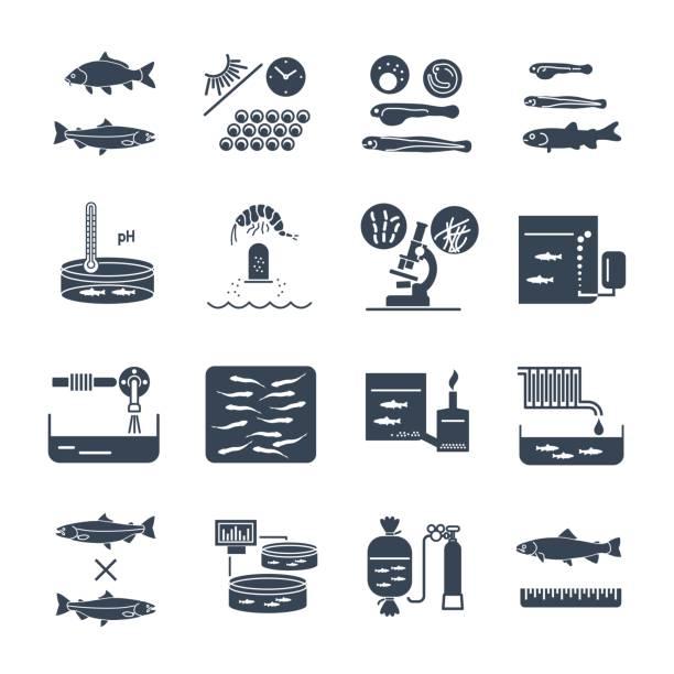 ilustrações de stock, clip art, desenhos animados e ícones de set of black icons aquaculture, fish farming - aquacultura