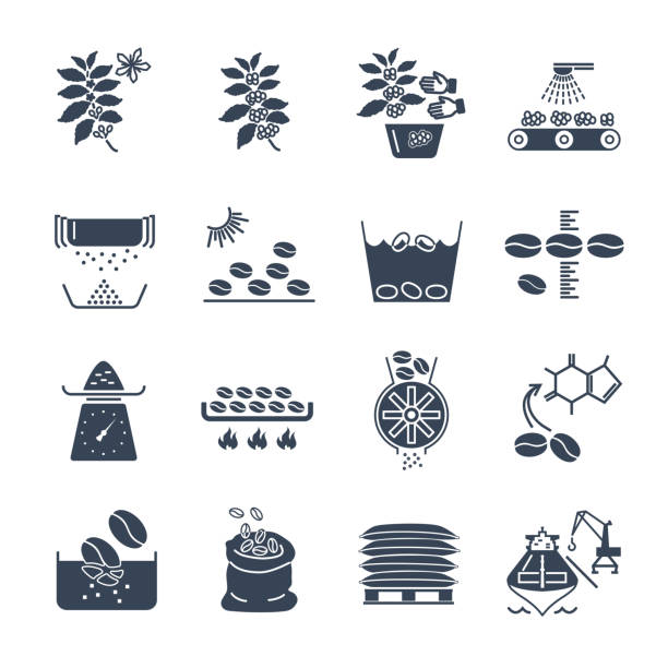 Set Of Black Icons Coffee Production Vector Art Illustration