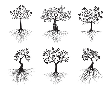 Set of black Isolated Olive Trees with Roots on white background. Vector Illustration and concept pictogram. Plant in garden.