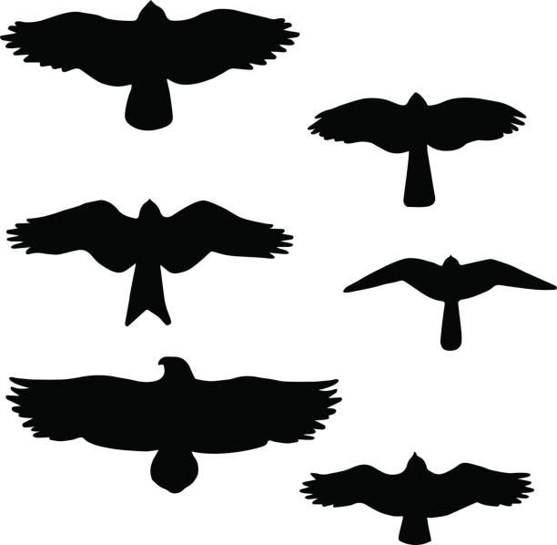 ilustrações, clipart, desenhos animados e ícones de conjunto de pretos isolados silhuetas de pássaros - ícones de design planar