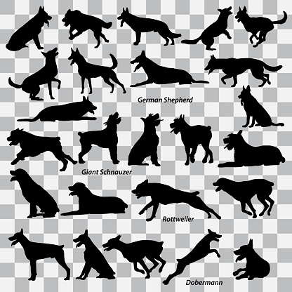 A set of black silhouettes of dogs on a transparent background. Set of vector illustrations