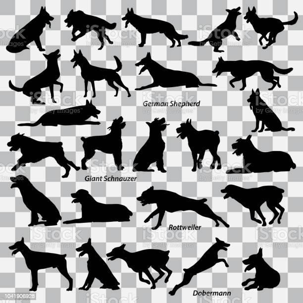 Set of black silhouettes of dogs on a transparent background set of vector id1041906928?b=1&k=6&m=1041906928&s=612x612&h=ygoxxteibinqmiixlfyexevr0wciwis vb7mer6lz80=