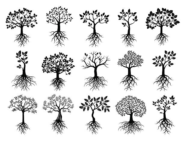 Top 60 Fruit Tree Clip Art Vector Graphics And Illustrations Istock