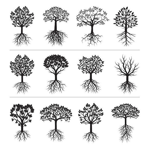 Set of Black Trees and Roots Set of Black Trees and Roots. Vector Illustration origins stock illustrations