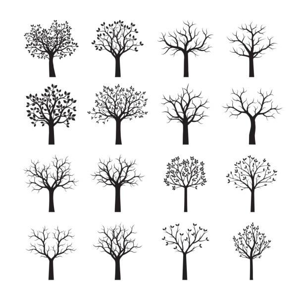 set of black trees. vector illustration. - gałąź część rośliny stock illustrations