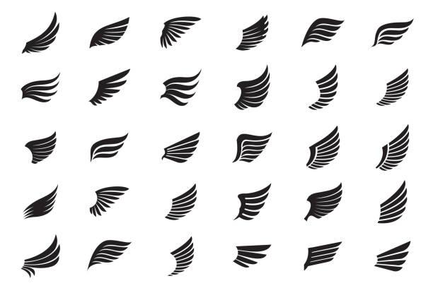 illustrations, cliparts, dessins animés et icônes de ensemble d'ailes noires. illustration de vecteur et icônes de contour. - aile d'animal