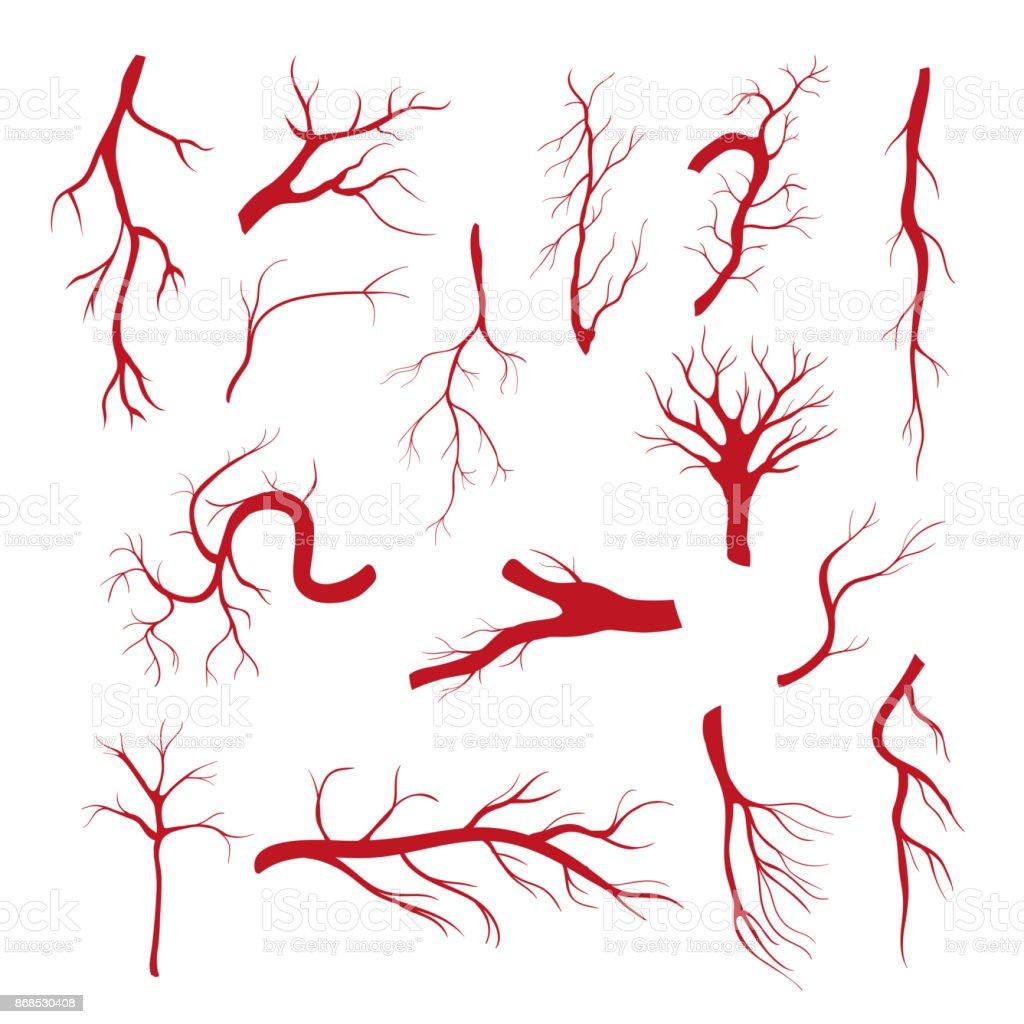 Set of blood vessels - modern vector isolated clip art vector art illustration