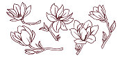 Set of blooming magnolias. Lineart