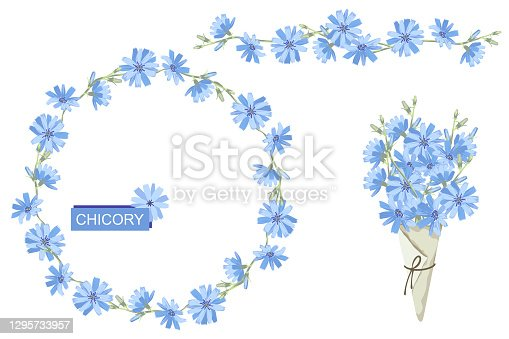 Set of blue chicory flowers, wreath and chicory bouquet in paper cone. Isolated on white background. Vector illustration.