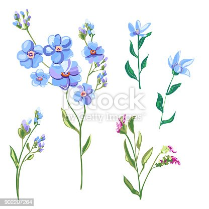 istock Set of blue flowers and buds, forget-me-not, tweedia, stems and leaves on white background, digital draw, decorative illustration, vector, EPS 8 902207264