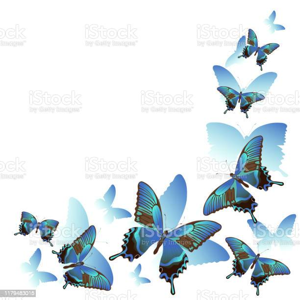 Set of blue realistic sailboat butterflies isolated on white vector vector id1179483015?b=1&k=6&m=1179483015&s=612x612&h=dxspsetpts4ddi6gxz2rjcvdj  679uegbqofrsdx18=