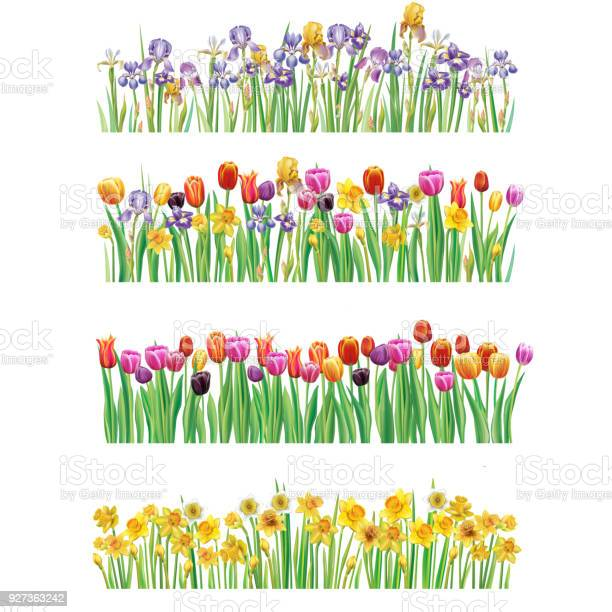 Set of borders with multicolor spring flowers vector id927363242?b=1&k=6&m=927363242&s=612x612&h=kprbdgwi2p7mvog5m6y0zycmn k nla7u03uqdqsg44=
