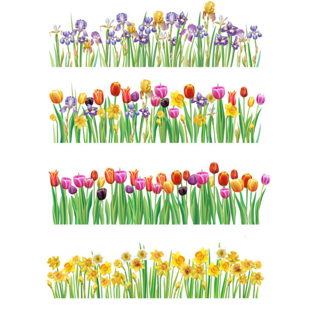 Set of Borders with multicolor spring flowers Set of Borders with multicolor vector spring flowers daffodil stock illustrations