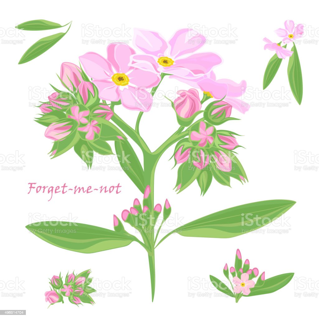 Set Of Bouquet Beautiful Pink Forgetmenot Flowers Stock Vector Art