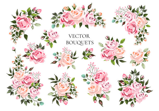 Set of bouquets pale pink and peachy flower roses with green leaves Set of bouquets pale pink and peachy flower roses with green leaves. Floral branch flowers arrangements for wedding invitation save the date or greeting card design. Vector illustration rose flower stock illustrations