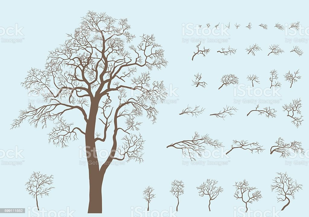 Set of branches and tree formed from these branches. vector art illustration