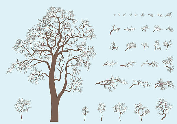 set of branches and tree formed from these branches. - winterruhe stock-grafiken, -clipart, -cartoons und -symbole