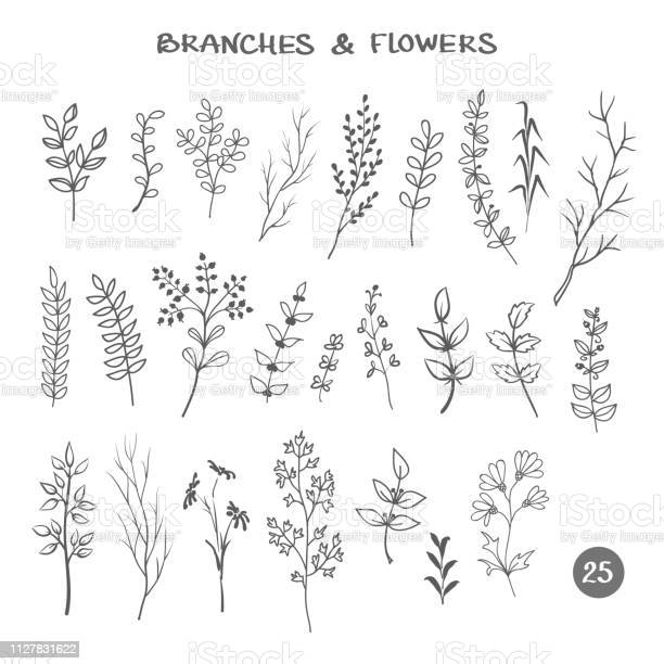 Set of branches hand drawn black ink isolated floral decorative herb vector id1127831622?b=1&k=6&m=1127831622&s=612x612&h=8rizfn 5hfwccdrueyy8d006y r63r7zqhudoenhrfu=