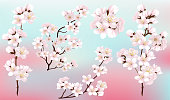 istock Set of branches of blooming pink sakura. Beautiful flowers of Japanese apple tree blossoms. 1299985150