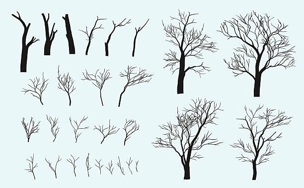 zestaw oddziałów. drzewa są utworzone z tych oddziałów. - gałązka stock illustrations
