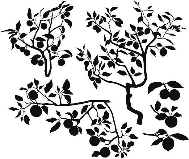 zestaw oddziały z owoców - gałąź część rośliny stock illustrations