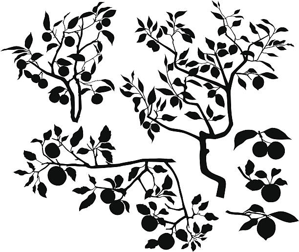 Set of branches with fruits Silhouettes of three branches branch plant part stock illustrations