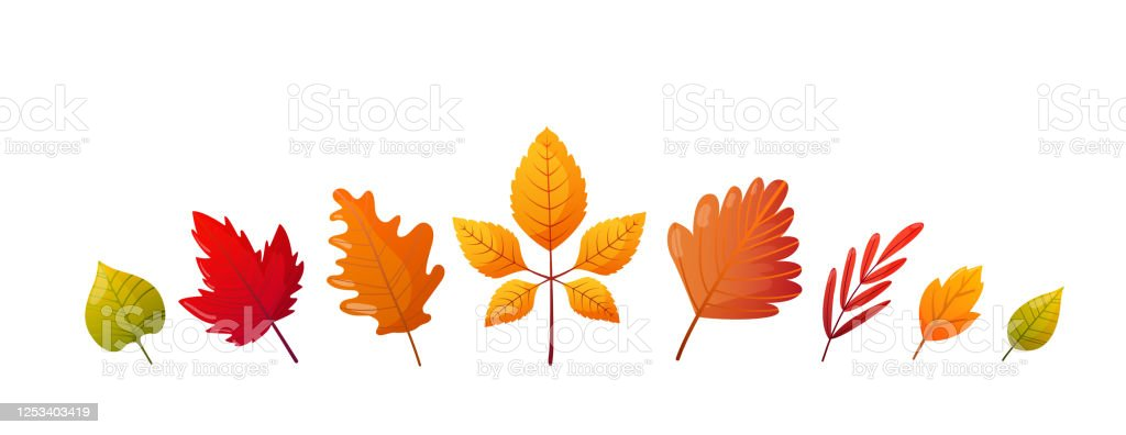 Set Of Bright Colorful Autumn Fall Leaves Stock Illustration - Download  Image Now - IStock