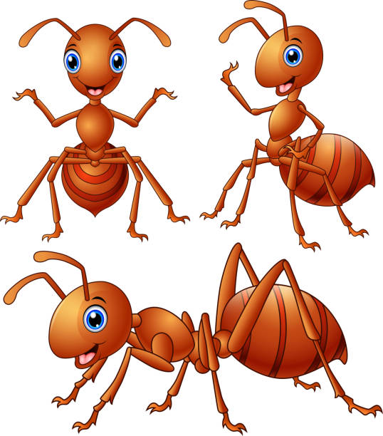 Set of brown ants cartoon vector art illustration