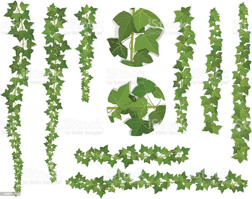 set of brushes ivy vine branches vector art illustration