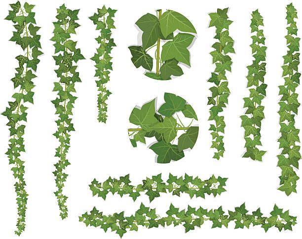 stockillustraties, clipart, cartoons en iconen met set of brushes ivy vine branches - klimop