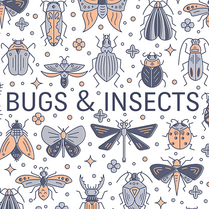 Set of bugs and insects banner made in linear style