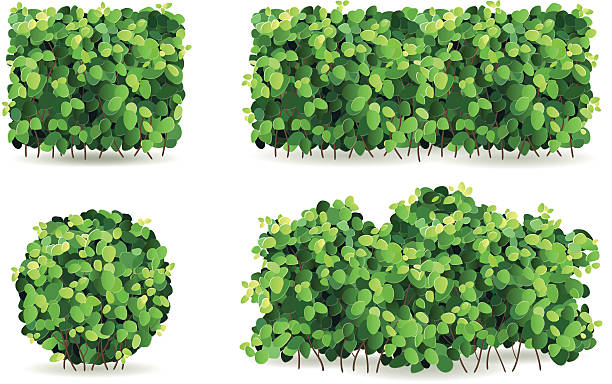 Conjunto de arbustos com folhas verdes de formatos diferentes. - ilustração de arte em vetor