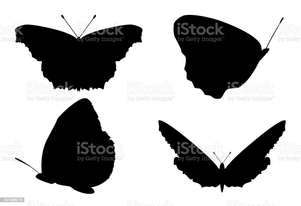 Set of butterflies silhouettes on white background, vector, eps 10
