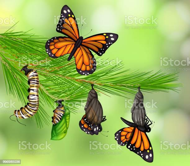 Set of butterfly life cycle vector id996985036?b=1&k=6&m=996985036&s=612x612&h=fgkv1hn5w6s6l3fits4qrqprsyesyji93pitn wxnxk=