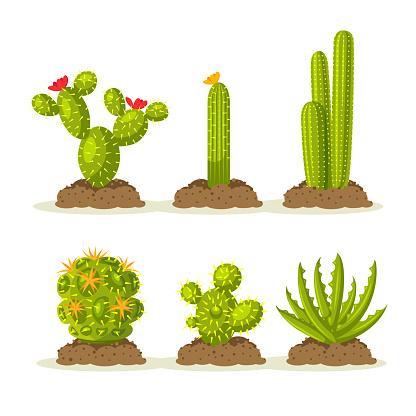 Set of cactus plants in desert among sand and ground, soil. Vector illustration
