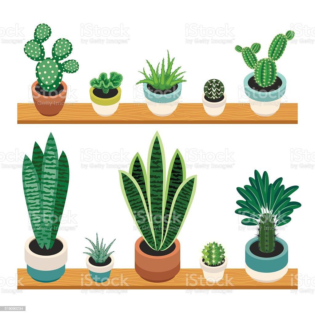 Impostare di cactus e piante grasse in vasi su mensole for Vasi piante grasse