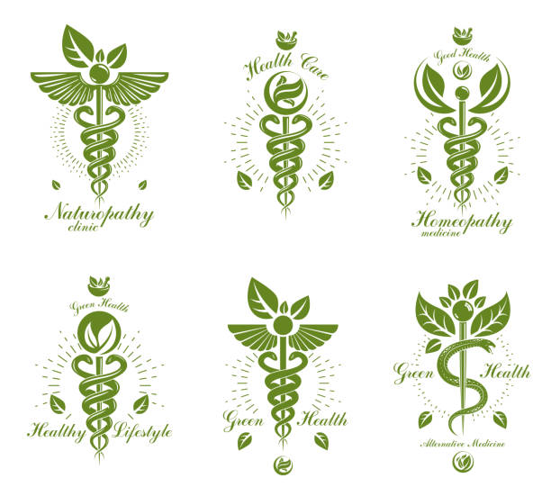 illustrazioni stock, clip art, cartoni animati e icone di tendenza di set of caduceus vector conceptual emblems created with snakes and green leaves. wellness and harmony metaphor. alternative medicine concept, phytotherapy. - ancient medical symbol