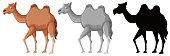 Set of camel character illustration