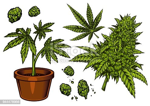 Set of cannabis flower, bud and leaves. Vector illustration