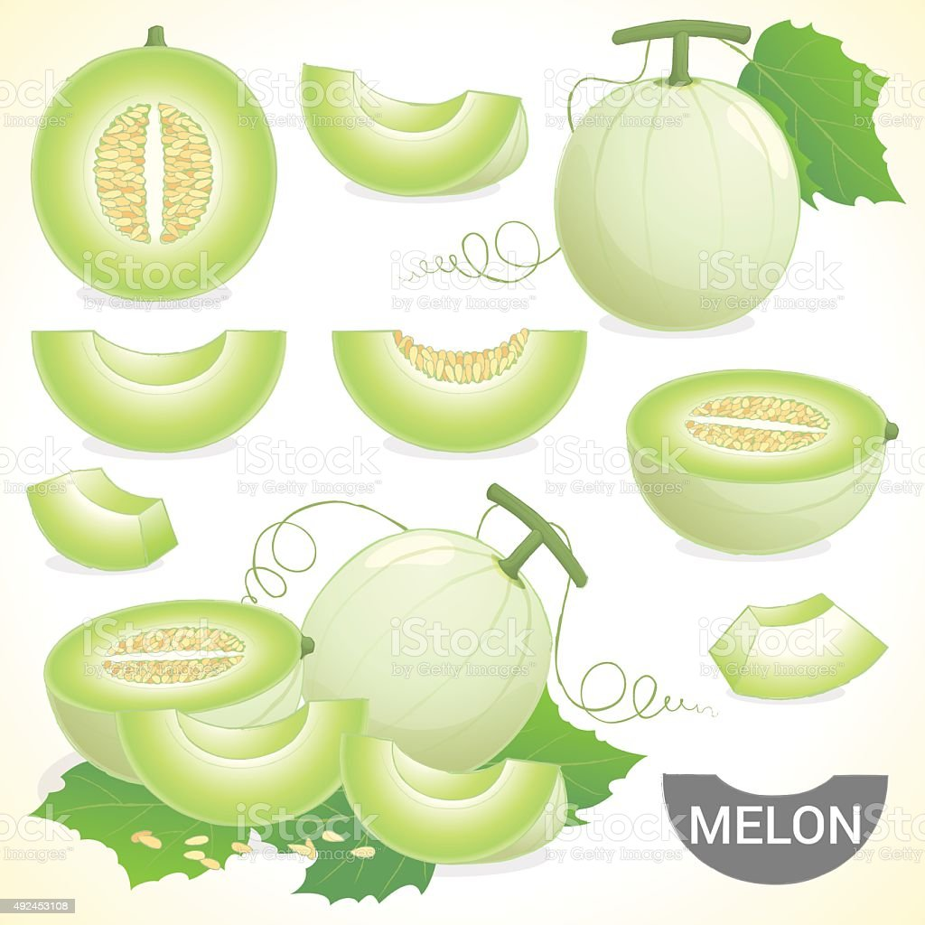 Set of cantaloupe honeydew honeymelon fruit vector format vector art illustration
