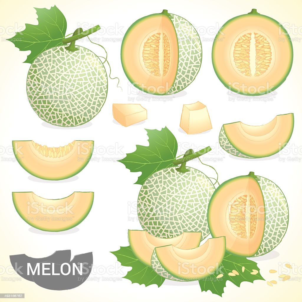 Set of cantaloupe melon fruit in various styles vector format vector art illustration