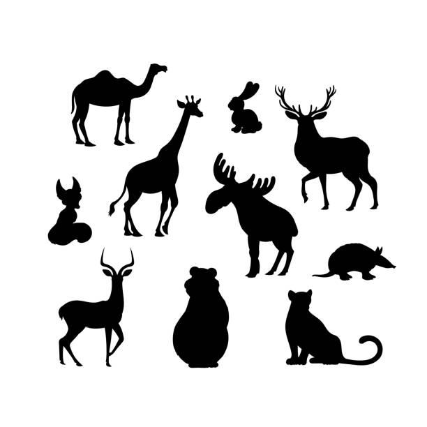 stockillustraties, clipart, cartoons en iconen met set van cartoon animal s silhouetten. camel, fox, jaguar, elanden, beer, gordeldier, haas, herten, impala, giraffe - antilope