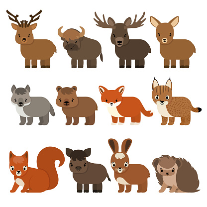 Set of cartoon animals of the forest and taiga, flat style. Vector isolated illustration on white background. Deer, fallow deer, bison moose, wolf, bear, fox, lynx, squirrel, wild boar, hare, hedgehog