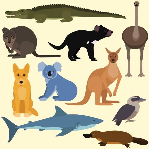 bildbanksillustrationer, clip art samt tecknat material och ikoner med uppsättning av tecknad australiska djur. - platypus