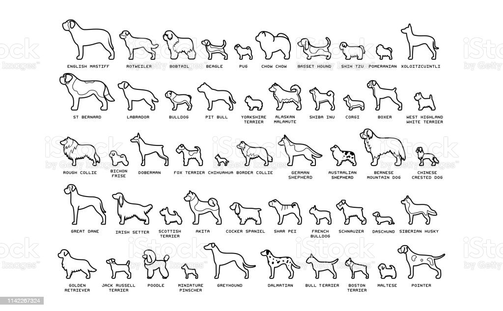 Set Of Cartoon Dogs Isolated On White Background