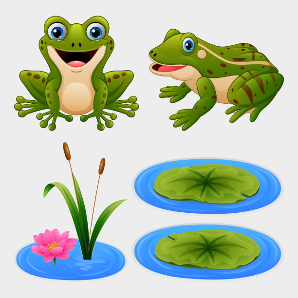 Animated Frog Croaking