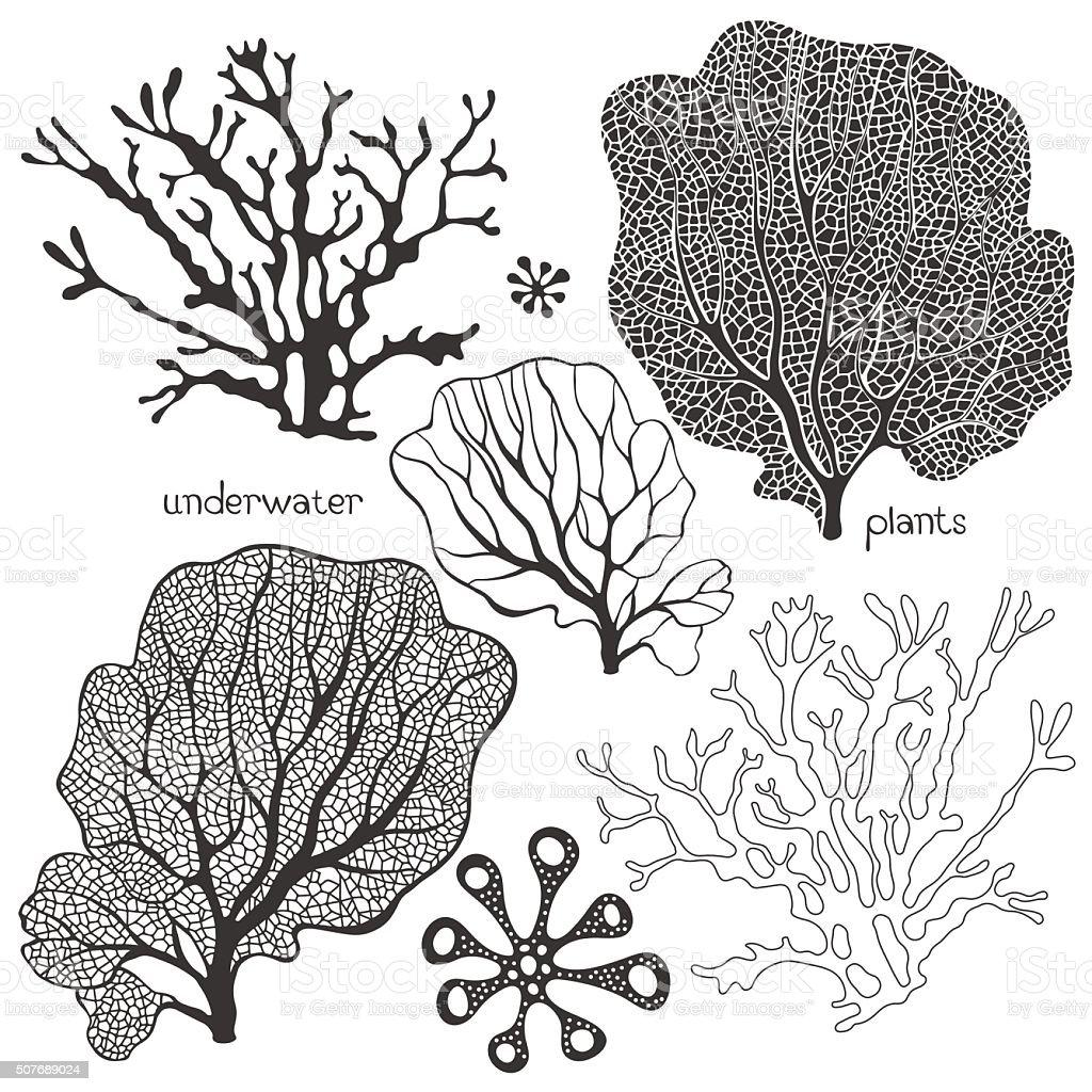 Gruppo Di Fumetto Subacqueo Piante Vettoriale Isolato Coralli E